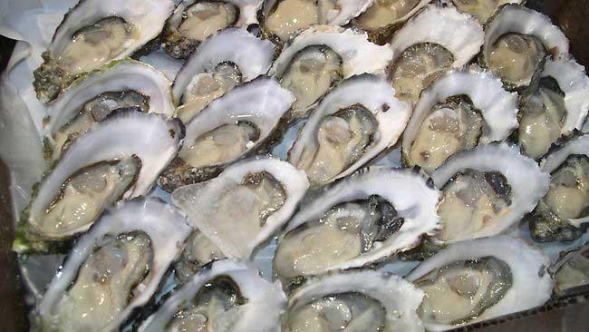 Mujer murió por comer ostras con bacteria 'come carne' en EU